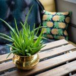 Come Usare l'Aloe Vera per il Viso - La Guida Definitiva